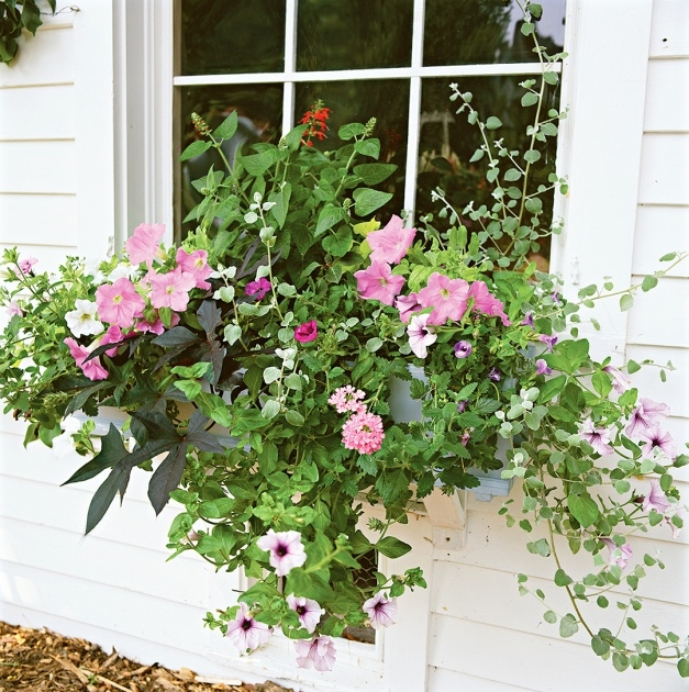 Surprising Best Flowers For Planters Image