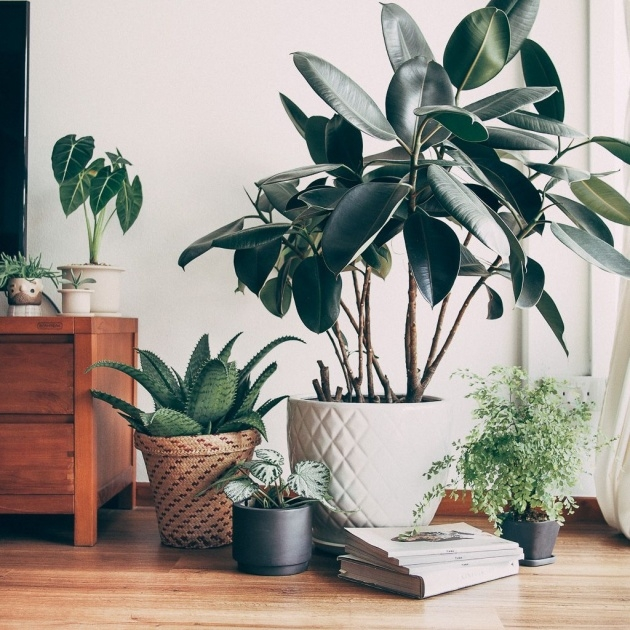 Surprising Indoor Pot To Beutify House Photo
