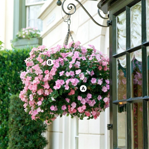 Surprising Pictures Of Trailing Plants For A Hanging Basket Picture