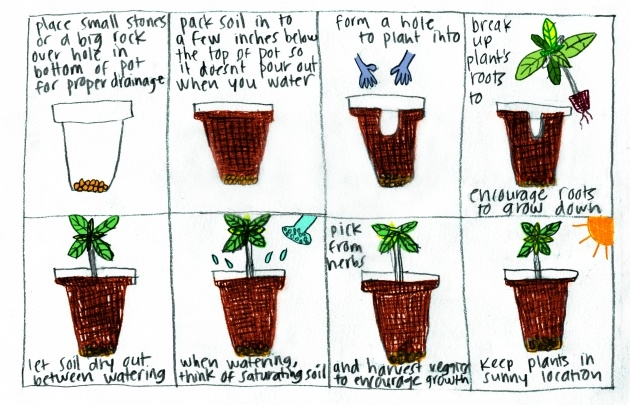 Top Bottom Watering Plants Picture