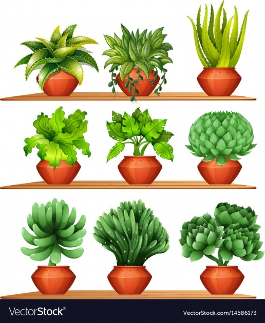Top Clay Pots For Plants Image
