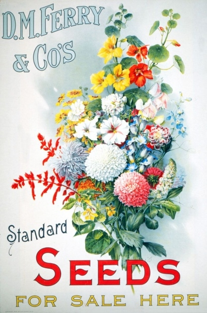 Top Ferry Morse Seed Catalog Image