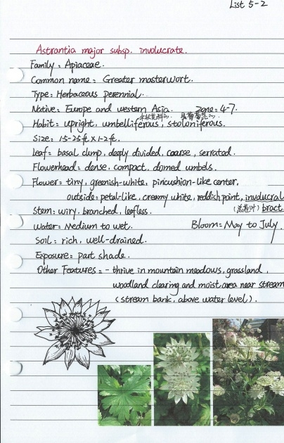 Top Herbaceous Plants List And Pictures Image