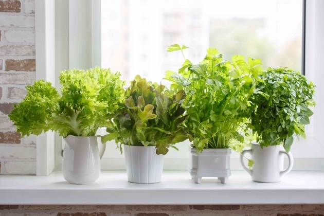 Top Planting Herbs In Pots Picture