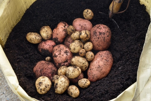 Top Planting Potatoes In Bags Photo