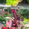 Plants For Planters In Shade