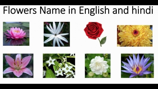 Top Types Of Flowers In Hindi Picture
