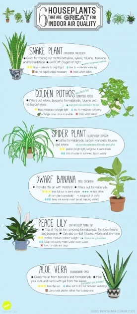 Wonderful Houseplants That Cool Air Picture