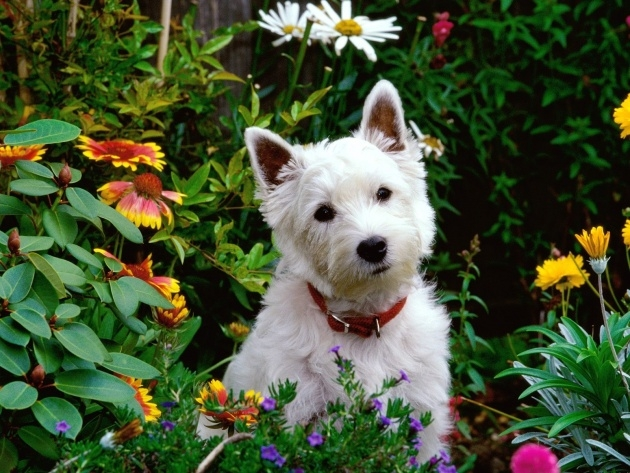 Wonderful Outdoor Plants Healthy For Dogs Image