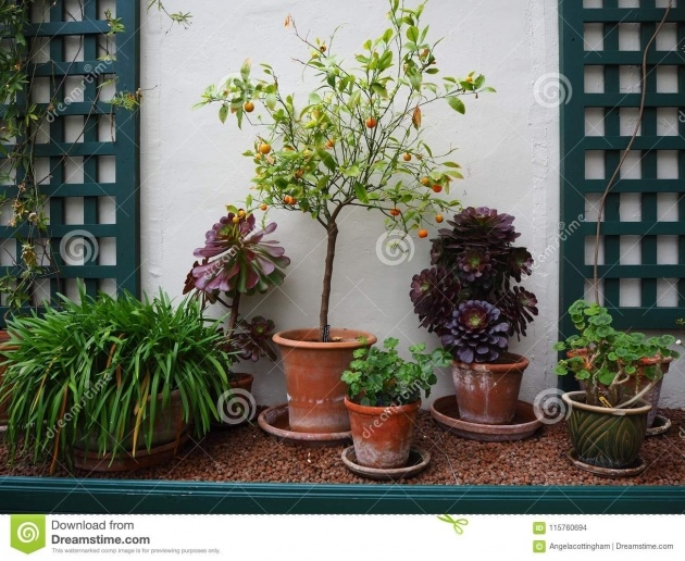 Wonderful Small Lattice For Potted Plants Photo